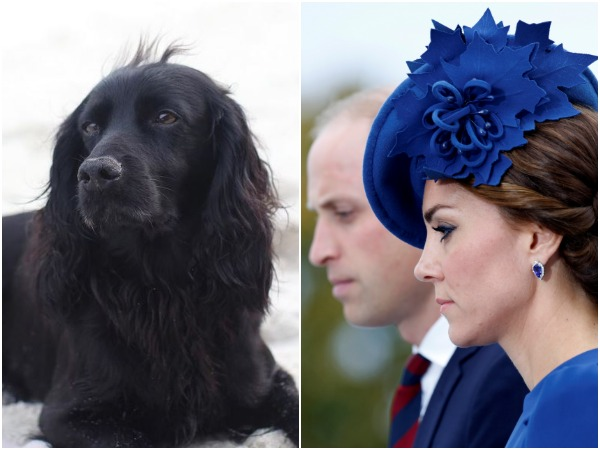 Lupo, Kate Middleton and Prince William