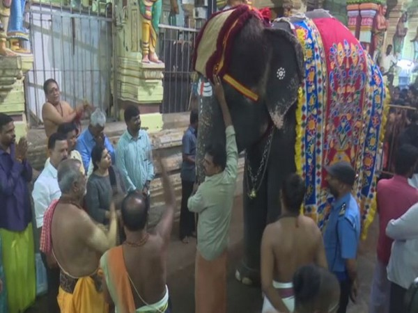 Temple elephant Ramalakshmi performing special pooja conducted at Rameswaram Ramanathaswamy Temple on Saturday. Photo/ANI