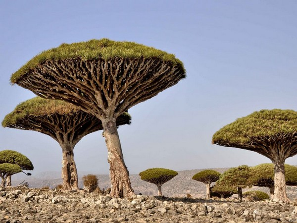 UAE's USD 110 mn development, relief aid enabled Socotra to overcome challenges, dire conditions [Image Credits: WAM]