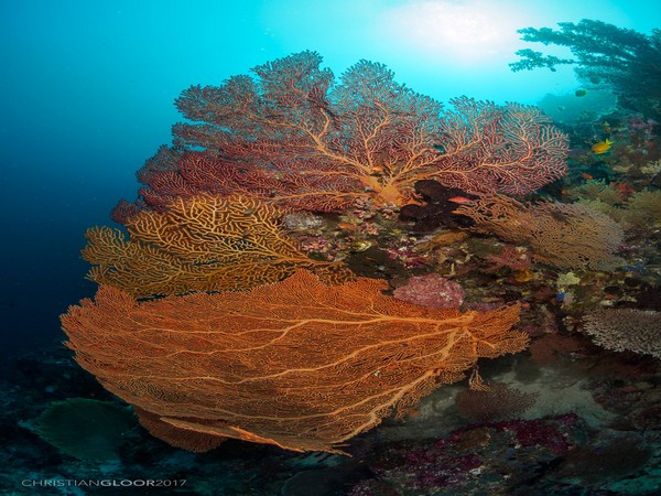 We can't manage the climate damage to coral reefs until we better understand how pollution and disease magnify the impacts of heat stress.