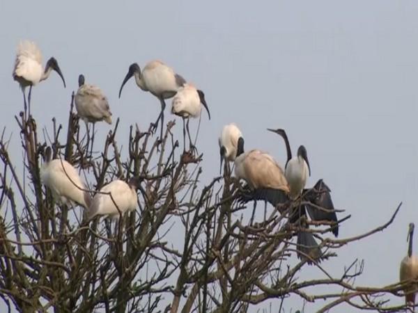 A visual from the Gudavi Bird Sanctuary. (Photo/ANI)
