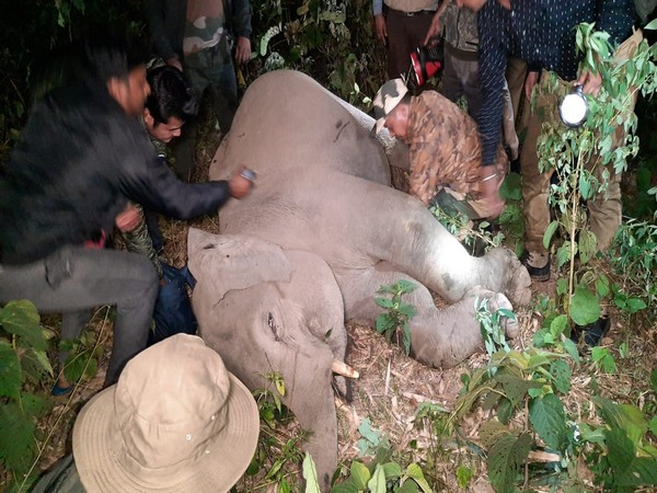 An elephant calf was injured while crossing the road here on Thursday night. Photo/ANI