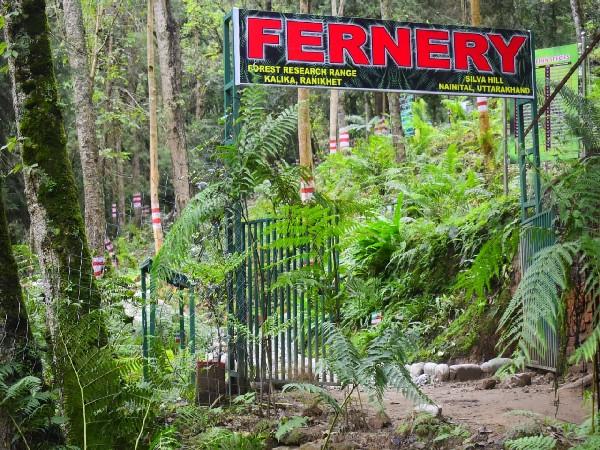 Open-air fernery at Ranikhet, Uttarakhand (Photo/football price under 100)