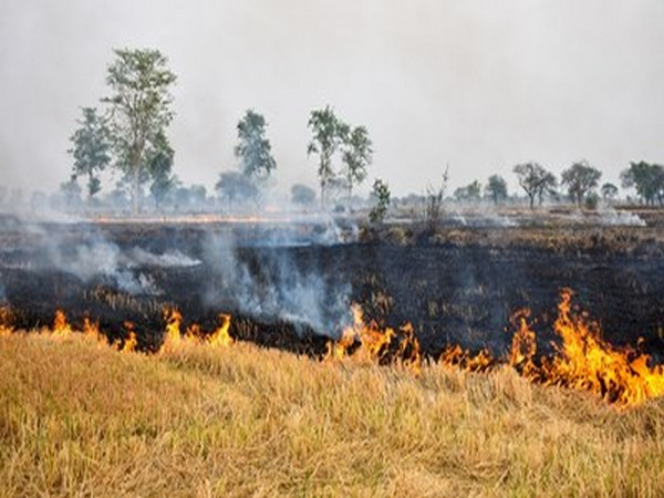 Agricultural waste burnt across large parts of India leads to increase environmental pollution, (Image courtesy: Shutterstock. For representational purpose only)