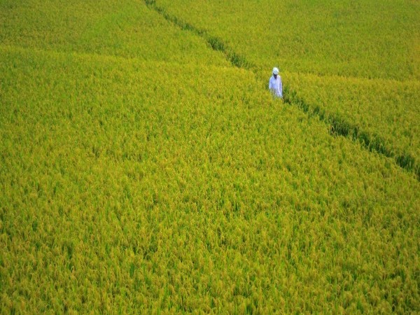 Agricultural GVA may rise by 3.5 to 4 pc in FY21