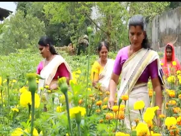 Flowers grown in Alapuzha Municipality (Photo/ANI)