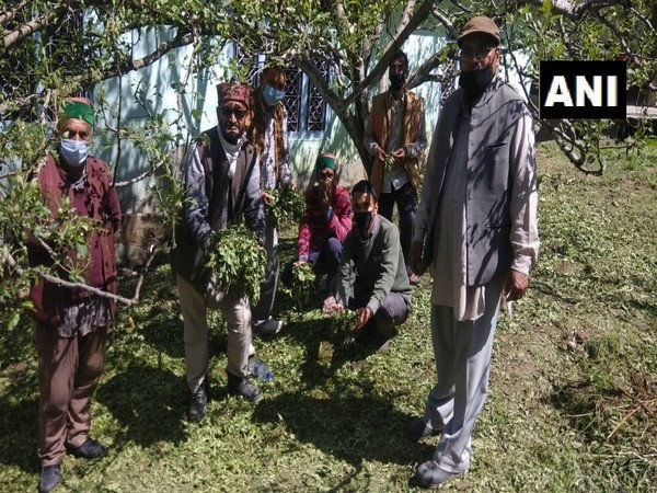 Villagers hold damaged crop of Apple after the hailstorm in Himachal Pradesh. Photo/ANI