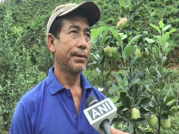 Farmer from Manipur grows variety of apples in one year in his orchard