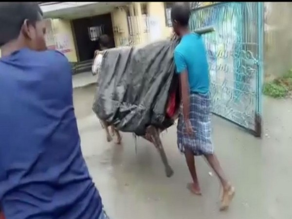 Two men carrying the woman in Chirang, Assam on Sunday. Photo/ANI