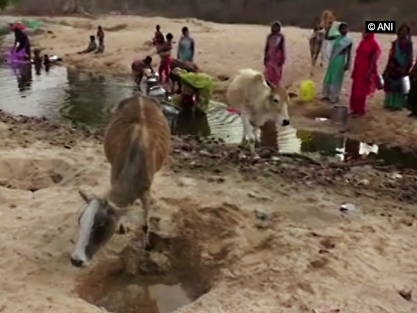 Villagers and animals are bound to share drinking water from the same pond in Balrampur [Photo/ANI]