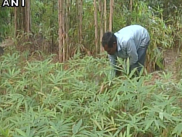 As per 2004 estimates, the size of the Chinese bamboo industry was worth Rs 2,500 crore whereas the Indian bamboo industry stood at Rs 2,043 crore.