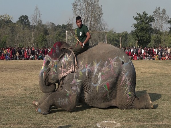 Elephants participate in beauty contest in Nepal