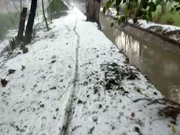 Unseasonal rain and hailstorm destroys crop in Rohtak