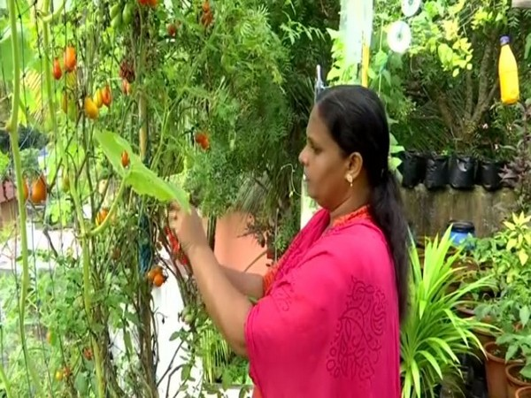 Padma Suresh, a housewife, grows almost 15 popular pesticide free vegetable varieties in her rooftop kitchen garden in Trivandrum, Kerala. (Photo/ANI)