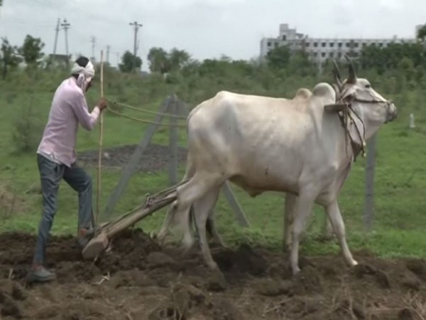 Farmers of Vidarbha are worried over delayed monsoon this year (Photo/ANI)
