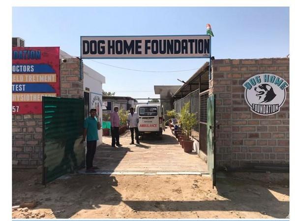Dog Home Foundation