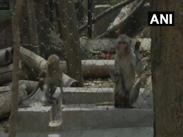 Sterilization of over 1,000 monkeys performed at Ranibagh Wildlife Transit Rescue Centre, Nainital