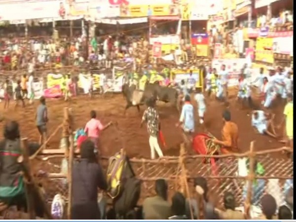 Jallikattu competition