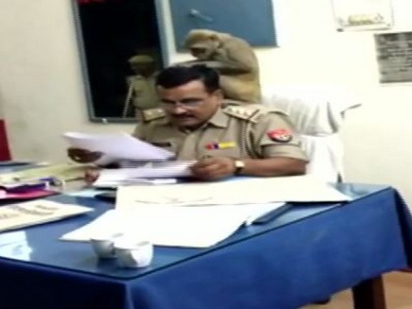 Monkey on the shoulder of Station House Officer (SHO) Srikanth Dwivedi as he flips through the documents. (Photo/ANI)
