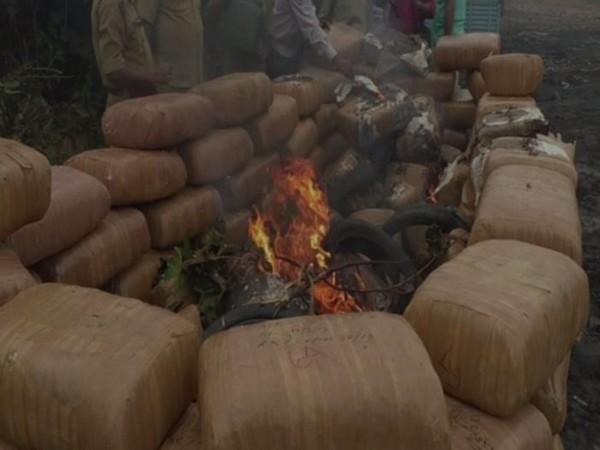 Tripura Police burning marijuana on Tuesday. Photo/ANI