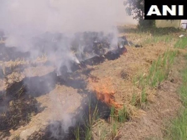 Farmers in Amritsar continue to burn stubble. (Photo/ANI)