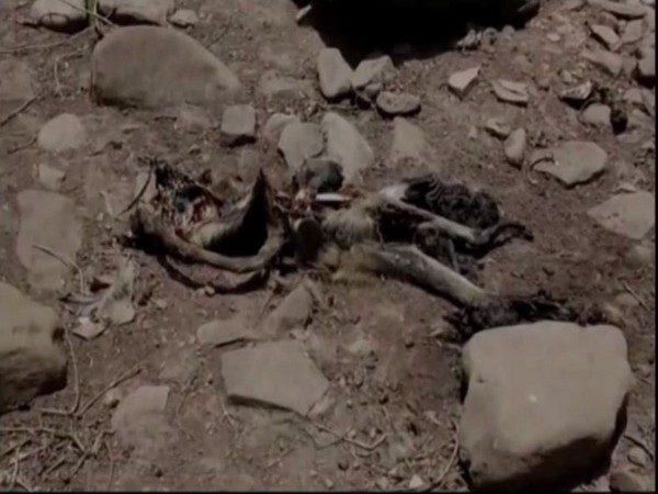 Money carcasses found in Damoh, MP [Photo/ANI]