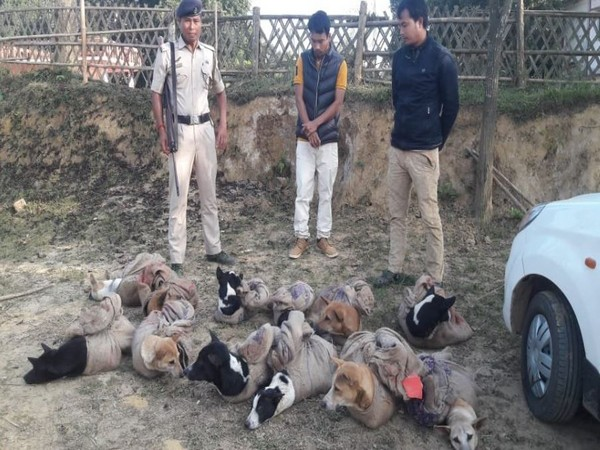 Two arrested while trafficking dogs in a car in north Tripura (Photo/ANI)