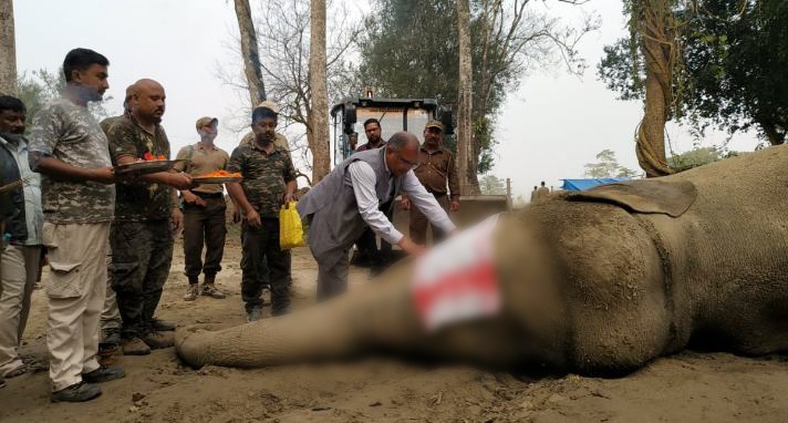 The elephant's carcass was buried with due honours (Photo/ANI)