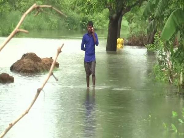 Farmers worried as rains damages crops in Gorakhpur. [Photo/ANI]