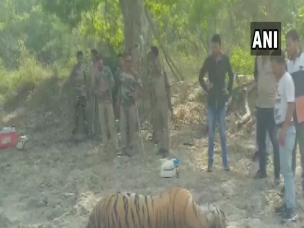 Authorities stand around the carcass of a tiger found in Jim Corbett National Park on Friday (Photo/ANI)