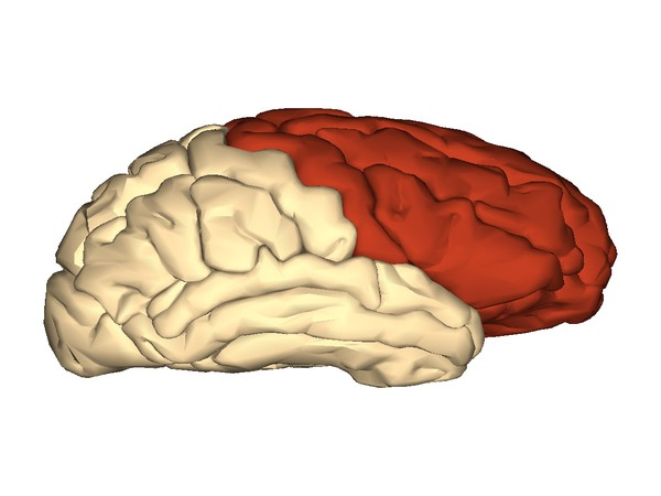 Our data firmly support that frontal areas are critical to the emergence of conscious perception