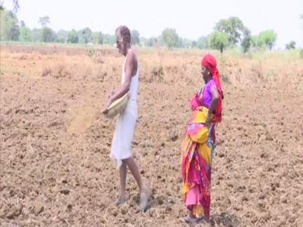 A village in Raipur, where 50 per cent harvest is affected due to rain deficit. Photo/ANI