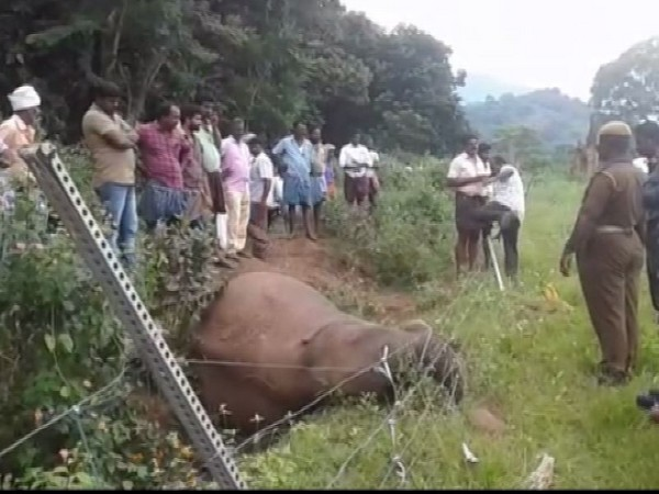 Forest departments on the spot at Coimbatore. Photo/ANI