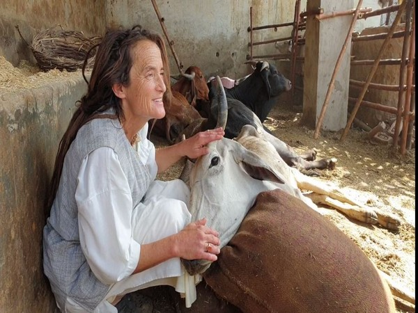 Friederike Irina Bruning playing with a cow in Mathura on Monday. Photo/ANI