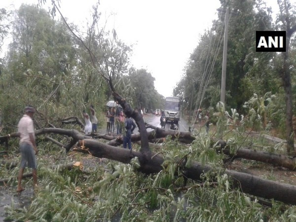 Trees uprooted in Odisha's Kalahandi due to rain, thunderstorm
