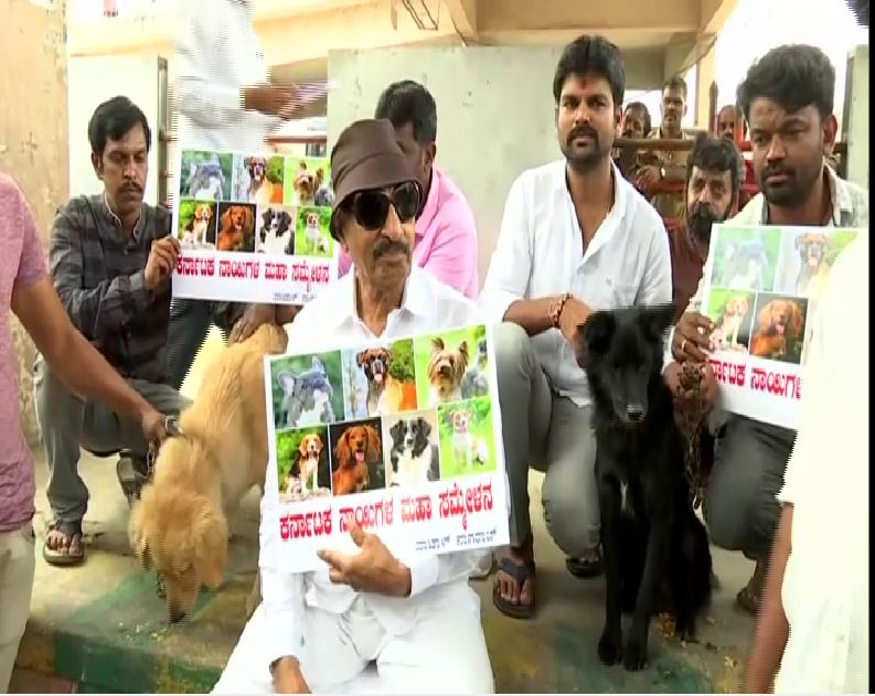 Activist and former MLA Vatal Nagaraj staging a protest along with dogs in Bengaluru. Photo/ANI