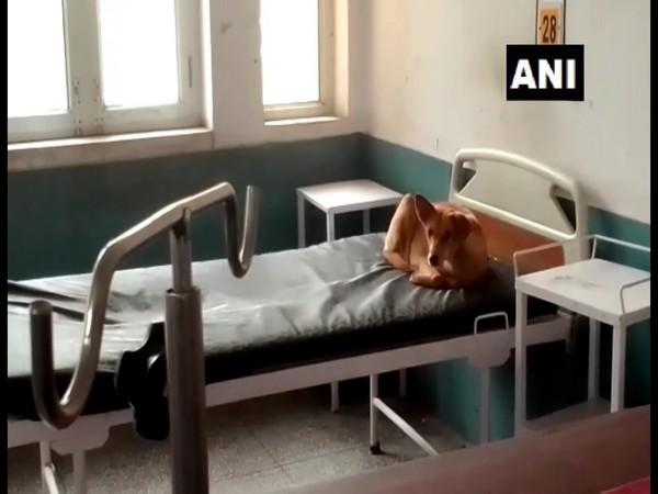 Visual from the hospital (Photo/ANI)