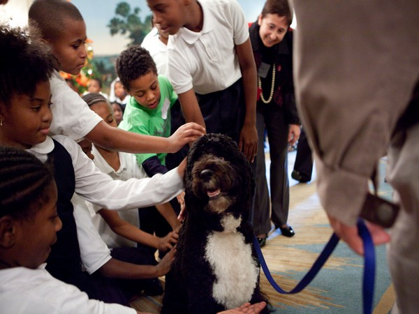 Bo, the first presidential pet in the Obama White House. (Source: Barack Obama/Twitter)