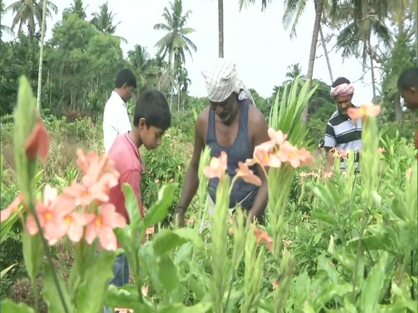 Small-scale flower growers working in fields of Holehonnuru (Photo/ANI)