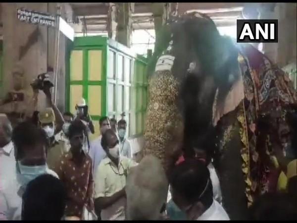 Temple elephant Parvati being examined on Friday. (Photo/ANI)