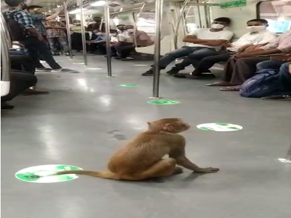 A monkey was spotted inside a Delhi metro on Saturday.