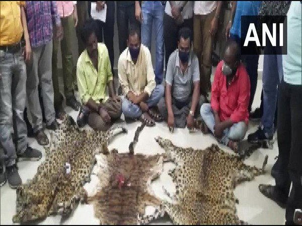 A visual of the arrested people along with skins of animals. (Photo/ANI)