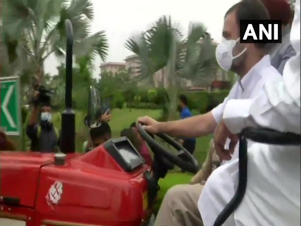 Congress leader Rahul Gandhi driving a tractor on Monday. Photo/ANI