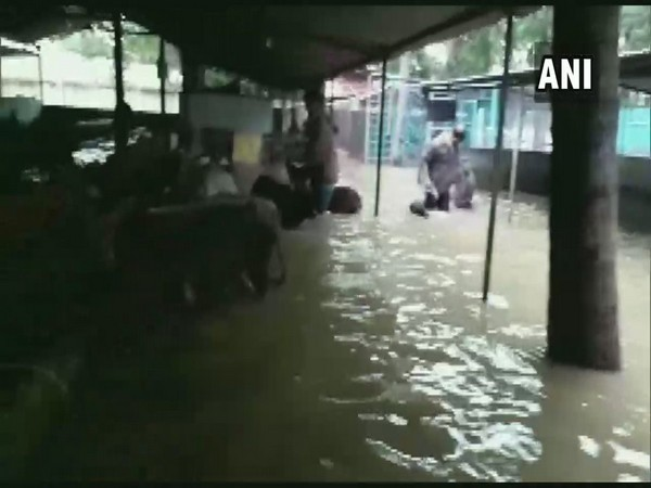 Almost 200 cattle in flood affected Shivamogga rescued by Kote police