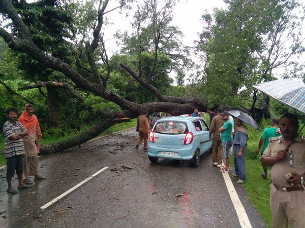 NH 154 blocked after a tree fell on the highway in Kangra district on Saturday [Photo/ANI]