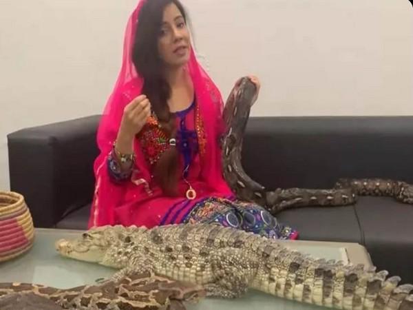 A Pakistani popstar Rabi Pirzada with reptiles