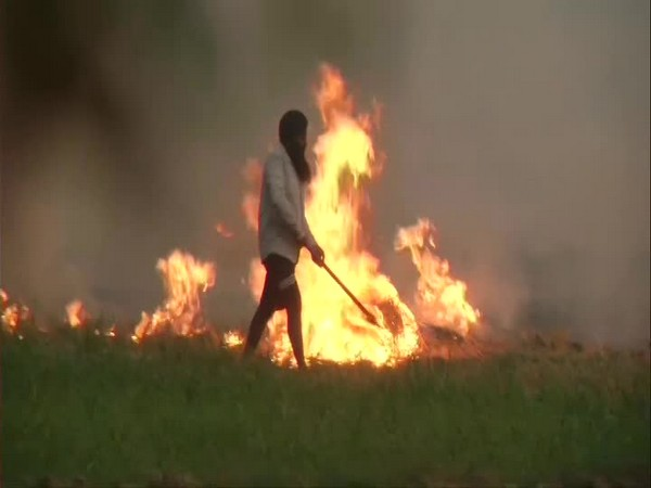 Crop stubble burning continues in Punjab, this in Rajpur district, despite ban. [Photo/ANI]