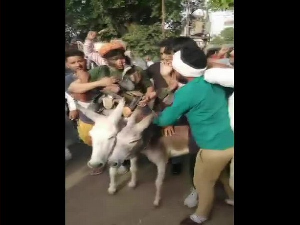 Two BSP leaders in Jaipur, Ramji Gautam and Sitaram were paraded on donkeys for indulging in anti-party activities [Photo/ANI]