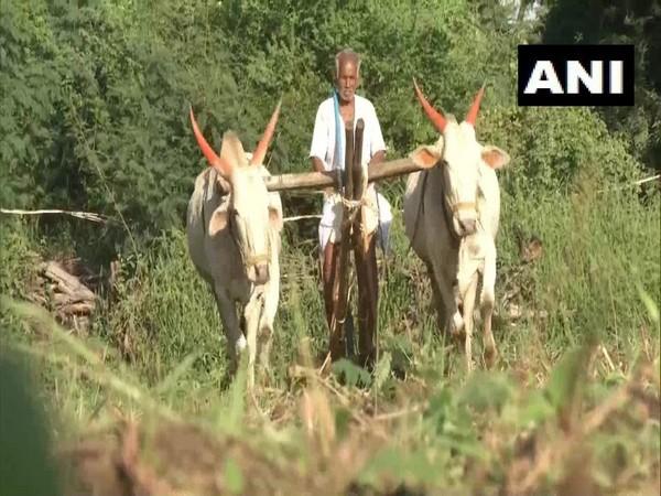 Basavanappa Patil working in his field. Photo/ANI