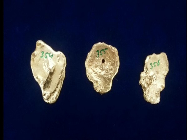 A total of 1.32 kilograms of gold worth Rs 60 lakh seized at the Chennai International Airport on Tuesday. Photo/ANI